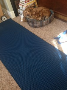 Yoga with my Dog.